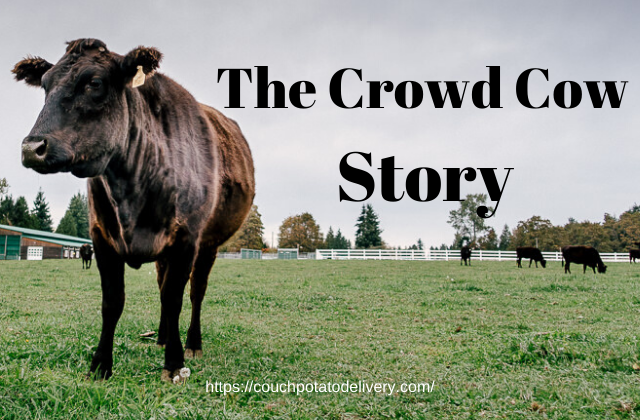 Story behind crowd cow - cow in pasture